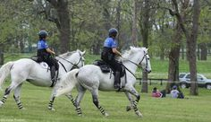 Bomb-Proofing Tips from Mounted Police Officers~All riders can benefit from the techniques police departments use to train their horses to stay calm in challenging situations.