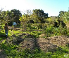 Permaculture's principles come from nature itself. #Permaculture #ecofriendly #ECOSYSTEMS #Sustainability www.mesasostenible.com/