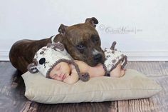 Baby and pit bull-love this pic-would have loved to have been able to do this with Sugar.