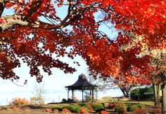 Fall in Eagle Rock Reservation, home to Highlawn Pavilion (restaurant, weddings & special events - www.highlawn.com) West Orange, NJ #foliage