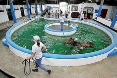 92 Best Equine Pool Images In 2018 Horse Stalls Dream