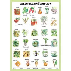 Zelenina z naší zahrady Primary Teaching, Teaching Science, Poland Culture, Learn Polish, Polish Language, Nature Study, Polish Recipes, School Hacks, Toddler Preschool