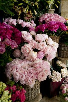 ♔audreylovesparis — Parisian flowers