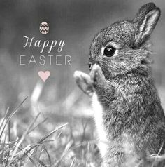 Frohe Ostern Frohe Ostern Happy Easter # Holidays and Special Occasion Happy Easter Wallpaper Easter, Ostern Wallpaper, Halloween Wallpaper, Holiday Wallpaper, Happy Easter Quotes, Happy Easter Wishes, Easter Greetings Messages, Happy Easter Everyone, Easter Art