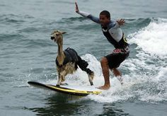 These 17 Radical Surfing Animals Will Get You So Stoked For Beach Season