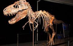 Tarbosaurus / Bataar