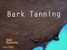 Bark Tanning - wanna make your own veg tanned leather? Tanning Deer Hide, Tanning Hides, How To Tan, Leather Restoration, Leather Projects, Leather Crafts, Native American Crafts, Survival Prepping, Survival Skills