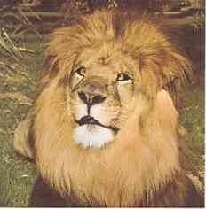 Na,wer kennt diesen bezaubernd schielenden Löwen noch?! Es ist Clarence aus Daktari! Schaut mal auf die folgende Seite! Es ist wie eine Zeitreise!! http://www.tv-nostalgie.de/index.htm