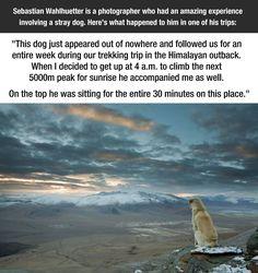 Cool dog trekking trip