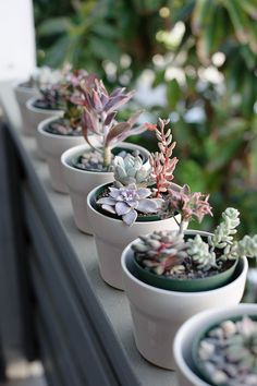 Miniature Succulent Garden by andy.kang, via Flickr