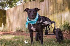 Dog Injured in Train Accident Dedicates Life to InspiringOthers