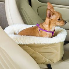 I need to make one of these for our Nuggett. Snoozer® Console Lookout® Pet Car Seat - PetSmart Something to consider. $40