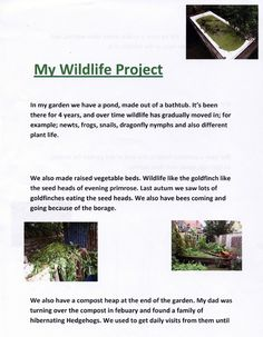 Kai, 12, has a very wildlife friendly garden. His bath tub  pond attracts lots of different pond life and lots of other animals living in his compost heap, like snakes, slow worms and hedgehogs. Natalie (BBOWT) http://www.bbowt.org.uk/stevebackshallcompetition