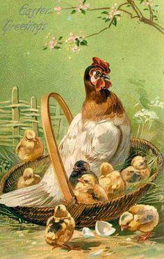 Hen & chicks in basket