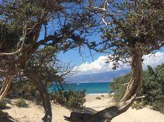 Isola di Chrissi, Creta Grecia