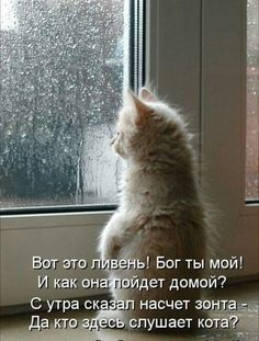 Russian Quotes, Russian Memes, Cute Baby Animals, Animals And Pets, Funny Animals, Birthday Greeting Message, Birthday Greetings, Smiley Emoji, Quotes And Notes