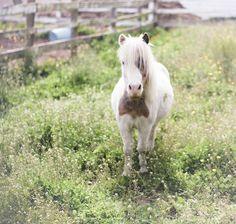 oh my heart...#pony