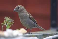 Nice bird.