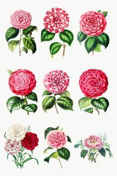 Printable Designs, Printable Stickers, Holography, Cute Emoji, Border Design, Free Illustrations, Camellia, Cool Logo, Flower Designs