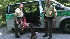 Bei Hitze im Auto gelassen - Polizei rettet Hunde