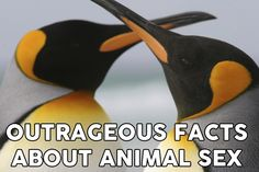 54 Outrageous Facts About The Sex Lives Of Animals
