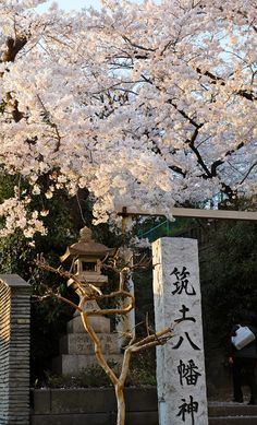 In Love with Japan Aesthetic Japan, Japanese Aesthetic, City Aesthetic, Travel Aesthetic, Aesthetic Anime, Aesthetic Backgrounds, Aesthetic Wallpapers, Japon Illustration, Scenery Wallpaper