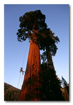 I NEED to climb a redwood tree in Redwood National Park