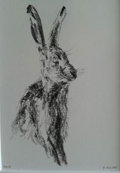 Original pencil drawing / sketch hare by S.Forster 10x8 mounted picture