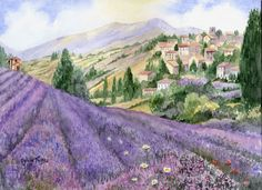 Lavender Field. A  watercolour by Sylvia Twiss