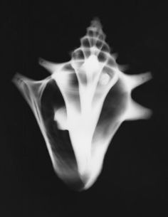 X-ray conch shell