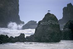A Gull Sits On A Rock At Cannon Beach Photograph by Phil Schermeister