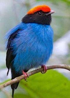 #nature beautiful #birds