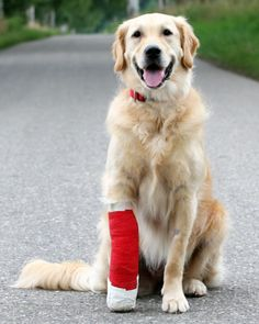 First Aid Tips for Pets