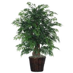 Vickerman 4 ft. Extra Full Ming Aralia Silk Bush >>> Want to know more, click on the image.