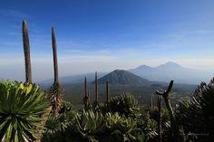Rwanda - Karisimbi - Widok w drodze na Karisimbi || http://www.szczytyafryki.pl || #Rwanda #Karisimbi