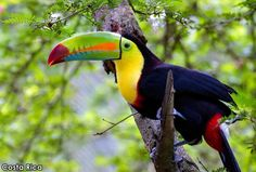 Do you want to spend some time with the locals? #costarica #travel #getoutside #seetheworld #seeeverything #toucan #nature #getoutdoors #adventure #explore #experience #timelesstravels