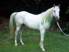 Colorful Manes and Tails - Home