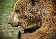 Brown Bear, Hungary, Places To Visit, Nap, Animals, Animales, Animaux, Animal, Animais