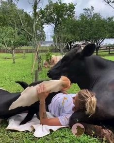 Cute Cows, Cute Funny Animals, Cute Baby Animals, Funny Cute, Animals And Pets, Cute Creatures, Beautiful Creatures, Animals Beautiful, Animal Pictures