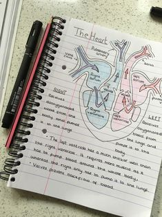 21 Ideas for medical notes ideas nursing students 21 Ideas for medical notes ideas nursing students Gcse Science, Science Notes, Science Biology, Science Experiments, Science Fair, Chemistry Notes, Biology Lessons, Biology Teacher, Preschool Science