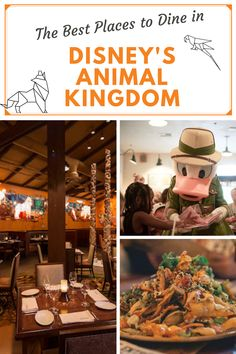 Animal Kingdom has some of the best food in Disney World. Celebrate a variety of global cultures with restaurants that serve delicious ethnic dishes.. #disney #animalkingdom #disneyfood