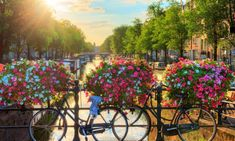Amsterdam to use flowers to stop cyclists chaining bikes to bridges | World news | The Guardian