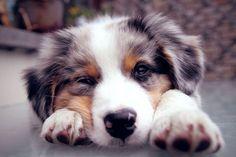 Dog-tired.