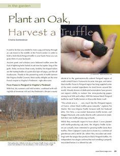 Plant an Oak. Harvest a Truffle