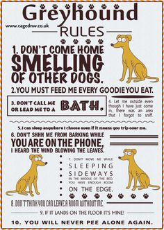 Definitely applies to Greyhound's cousin, the Whippet,  as well