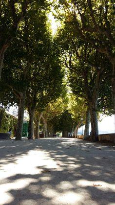 Um pequeno pulmão dentro da cidade de Coimbra. Parque Dr. Manuel Braga