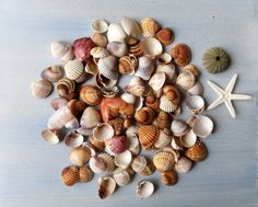 Assorted Colorful Small Seashells Mix for Crafts or Decor 123 pieces Sea Urchin Shell, Favorite Pastime, Black Spot, Seashells, Heart Shapes, Jewelry Making, Colorful, My Favorite Things, Artist