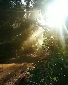 ❤Beauty of Phesama❤ village vibe nature😍🍂🍁🍂 Beautiful Photos Of Nature, Beautiful Gif, Nature Pictures, Amazing Nature, Beautiful Landscapes, Beautiful Places, Images Of Nature, Pictures Of Light, Amazing Pictures