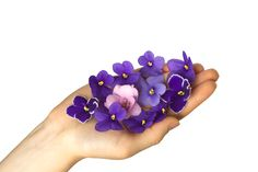 African Violet petals #violet #purple #flowers ✿