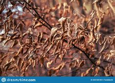 Leaf Images, Nature Photos, Orange Color